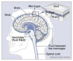 Brain-nci-vol-4279-150